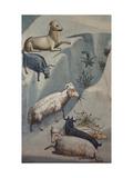 Dream of Joachim  Sheep