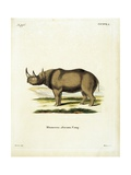 Rhinoceros from group of color lithographs of African animals  19th c