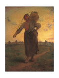 Norman Milkmaid of Greville