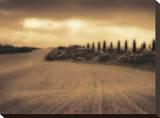 Cypress Study - Tuscany