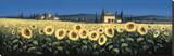 Tuscan Panorama  Sunflowers