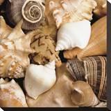 Beachside Shells