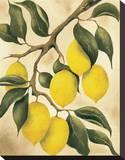 Italian Harvest  Lemons
