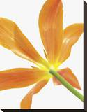 Floral Saturation IV
