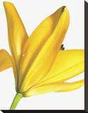Floral Saturation I