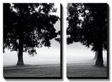 Fog in the Park II
