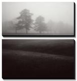 Fog Tree Study II