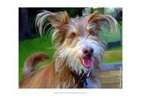 Terrier Hairspray