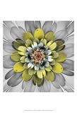 Fractal Blooms IV