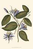 Lavender Floral III