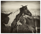 Kissing Horses II
