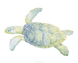 Tranquil Sea Turtle II