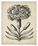 Distinguished Floral II