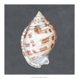 Shell on Slate I