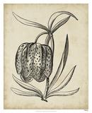 Distinguished Floral IV