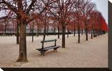 Tuileries Gardens in Winter  Paris  Ile de France  France