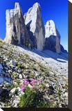 Tre Cime di Lavaredo  Sexten Dolomites  Province of Bolzano  South Tyrol  Italy
