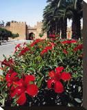 Town Wall of Taroudant  Sous Valley  Anti Atlas  Agadir  Morocco