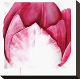 Samba Tulip Bloom