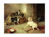 Kittens and Dog  1881