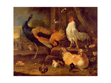 Poultry  c1670