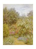Roses in a Surrey Garden