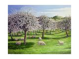 Celebration of Apple Blossom in Somerset  2004