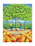Cocoa Tree  1993