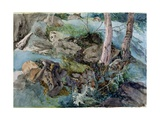 Study of Rocks and Ferns in a Wood at Crossmount  Perthshire  1843