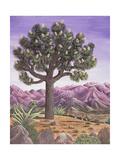 Joshua Tree and Coyote  1983