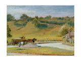 Winchelsea  1909
