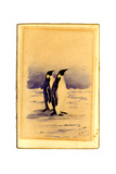 Emperor Penguins  1904