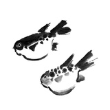 Chinese Painting Of Swellfish On White Background