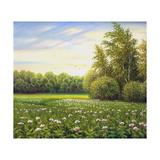Beautiful Summer Landscape  Canvas  Oil