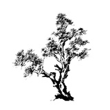 Chinese Traditional Ink Painting  Pine Tree On White Background
