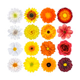 Various White  Yellow  Orange And Red Flowers Isolated On White