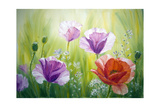 Poppies In The Morning  Oil Painting On Canvas