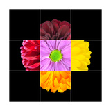 Colorful Daisy Flower Mosaic Design