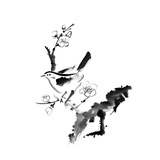 Chinese Painting   Plum Blossom And Bird  On White Background