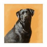 Oil Painting Portrait Of Black Labrador Male