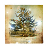 Vintage Winter Background With Pine Tree
