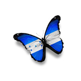 Honduras Flag Butterfly  Isolated On White