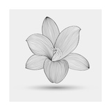 Abstract Floral Flower Lily