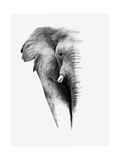 Artistic Black And White Elephant Reproduction d'art par Donvanstaden