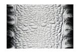 Black-White Crocodile Skin Texture