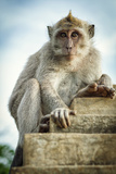Portrait Of The Monkey In The Uluwatu