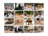 Wild Animals Collage
