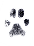 Dog Fingerprint