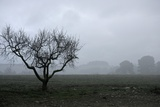 Dried Tree Vanish Into The Winter Fog