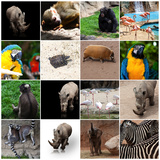 Various Wild Animals Composition